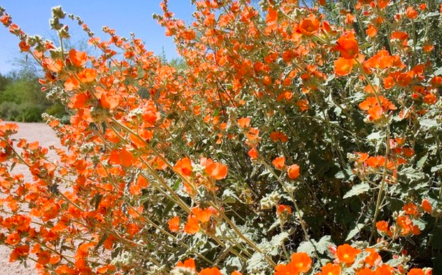 Warm Up Your Garden With Orange Flowers